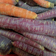 this is a picture of some orange carrots and some purple carrots