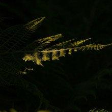 A fern shrouded in darkness