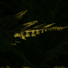 A fern shrouded in darkness