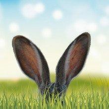 Rabbit's ears in long grass