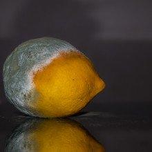 moudly fruit