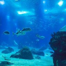 A vibrant underwater ecosystem.