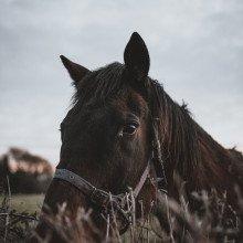 Black horse in field