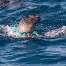 Seal in plastic.