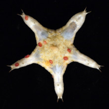 Deep sea creatures from the Pacific seafloor