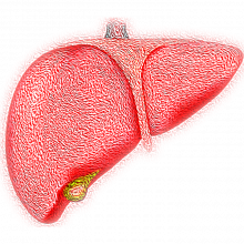PICTURE OF A LIVER