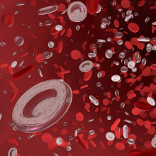Artist's rendition of red blood cells