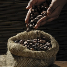 Pouring cocoa beans into a sack by hand.