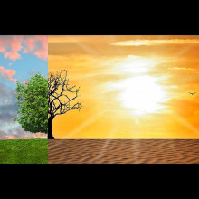 A tree shown in split-screen between a lush field and a hot desert.