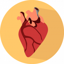An illustration of a human heart.