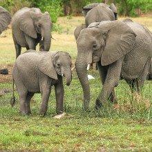 photo of African elephants