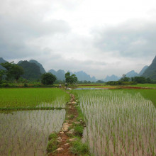 A rice field in Yunnan province, China.