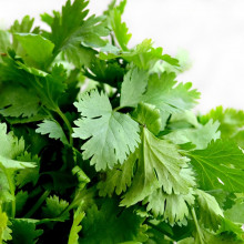 A bunch of cilantro