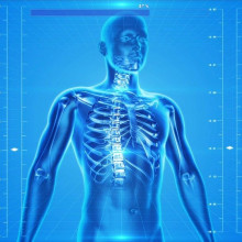 A blue CGI image of a body, showing the skeleton