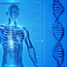 Stylised human torso showing skeleton with DNA to side