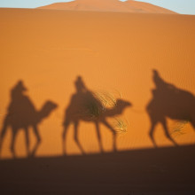 Camels crossing the desert
