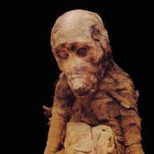 Baboon mummy