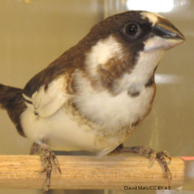 Birds learn best when presented with a song tuned to their abilities