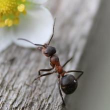 Ant near a white flower