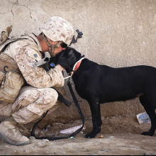 A soldier kissing a black dog on the head