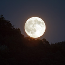 Full moon over a forest