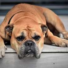 photo of a dog that looks bored