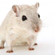 A mouse.