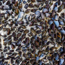 Mussels on the seashore