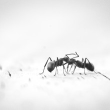 A single ant
