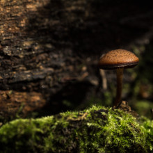A mushroom growing on some bark.