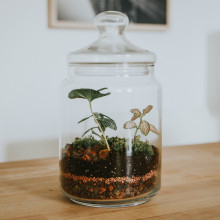A glass jar terrarium with some dirt and plants.