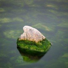 Algae on a rock