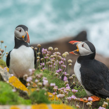 Talking Puffin