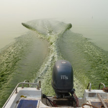 Like pea soup, a thick mat of toxic microcystins cyanobacteria on Lake Taihu in China gets stirred up in the wake of a boat.
