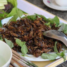 Deep fried insects