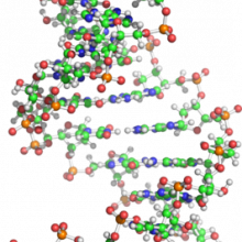 NMR structure of the central region of the human GluR-B R/G pre-mRNA, from the protein data bank ID 1ysv