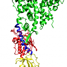 One molecule of the Dicer-homolog protein from Giardia intestinalis, colored by domain (PAZ domain yellow, platform domain red, connector helix blue, RNase and bridge domains green). Dicer is an RNase that cleaves long double-stranded RNA molecules...