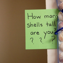 How Many Shells Tall are You?