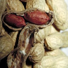 Close up of peanuts