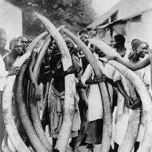 Men with ivory tusks, Dar Es Salaam