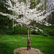 Empathy Tree Hugger