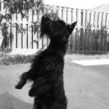Dog doing a trick