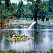 A scene in the Atchafalaya Basin in Louisiana, USA.