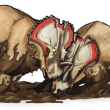 A pair of Centrosaurs fighting
