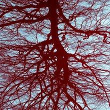 Blood vessel network