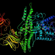 The protein structure of botulinum toxin, the agent produced by Clostridium botulinum, the cause of botulism