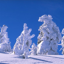 Snowy trees on mount Brocken, Harz, Germany