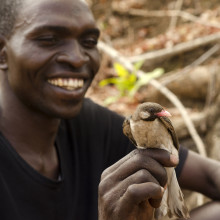 Yao honey-hunter Orlando Yassene holds a wild greater honeyguide male (temporarily captured for research) in the Niassa National Reserve, Mozambique.