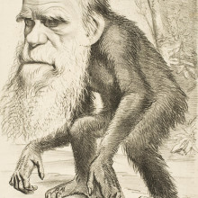 Darwin cartoon - Originally published in The Hornet magazine; this image is available on University College London Digital Collections (18886)