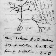 Page from Dawins notebooks around July 1837 showing the first-known sketch by Charles Darwin of an evolutionary tree describing the relationships among groups of organisms.